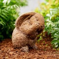 80043_Shy_Bunny-320x433