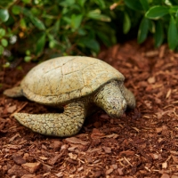 82006_Loggerhead_Sea_Turtle-640x865